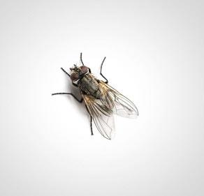 Thermo-bug hilft auch gegen Fliegen
