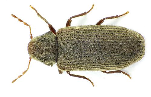 Thermo-bug vernichtet auch den Holzwurm zuverlässig