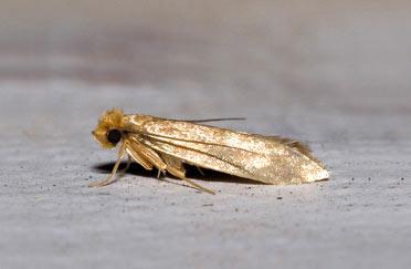 Thermo-bug tötet auch Schädlinge wie die Kleidermotte