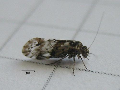 Thermo-bug hilft auch gegen Staubläuse